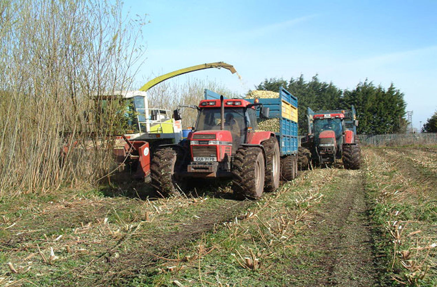 Willow-Harvester-3
